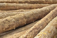 Many Big Pine Wood logs In Large Woodpile Background Texture Stock Image
