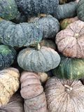 Many big pumpkins in market. Many pumpkins in the market for cooking royalty free stock photography