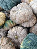 Many big pumpkins in market. Many pumpkins in the market for cooking stock image