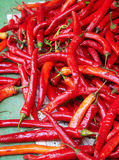 Many big red chili Stock Image