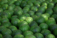 Many big sweet green watermelons Royalty Free Stock Image