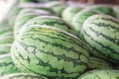 Many big sweet green watermelons and one cut watermelon.  royalty free stock images
