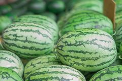 Many big sweet green watermelons and one cut watermelon.  royalty free stock image