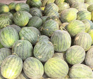 Many big sweet  watermelons Stock Photography