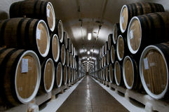 Many big wine barrels in a wine cellar Royalty Free Stock Photos