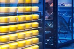 Many big yellow heads of fresh cheese lie on the shelves of a mini-shop. Stock Photo