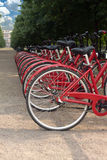 Many bikes standing in a park on summer day Stock Photo