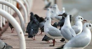 Many Birds Begging For Food