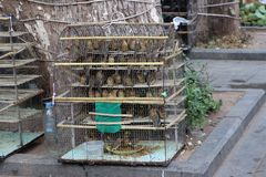 Many birds are caught in the cage to sell to philanthropists for set the birds free. For merit stock image