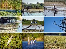 Many Birds of Danube Delta Royalty Free Stock Photography