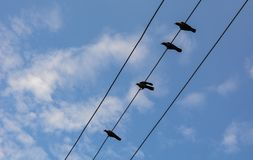 Many birds on the electric wires. Under blue sky at sunny day stock photos