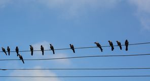 Many birds on the electric wires. Under blue sky at sunny day stock images