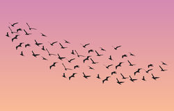 Many birds flying in the sky, nature series vector illustration