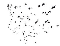 Many birds flying in the sky Stock Images