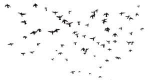 Many birds flying in the sky Royalty Free Stock Photos