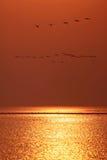 Many birds Stock Photography