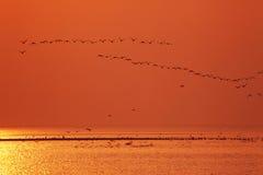 Many birds Stock Image