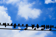 Many birds are on the line, Silhouet.  Stock Photography