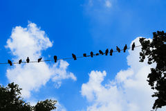 Many birds are on the line, Silhouet.  Royalty Free Stock Photography