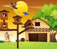 Many birds living in birdhouse. Illustration Stock Photo