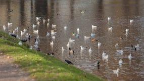 Many birds Royalty Free Stock Photo