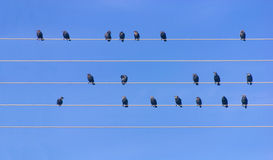Many birds sitting at wires. Against blue sky Royalty Free Stock Images
