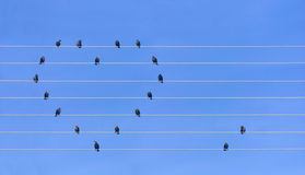 Many birds sitting at wires in form of heart Stock Images