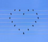 Many birds sitting at wires in form of heart Royalty Free Stock Image