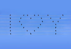 Many birds sitting at wires in form of heart and words Stock Images