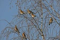 Many birds on the tree Royalty Free Stock Photos