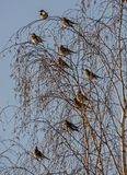 Many birds on the tree Stock Images