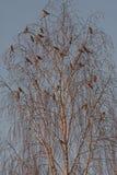 Many birds on the tree Stock Photos