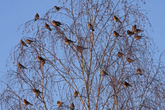 Many birds on the tree Royalty Free Stock Images
