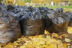 Many black garbage bags in autumn park Stock Images