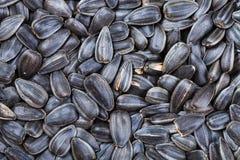 Many black roasted sunflower seeds Stock Image