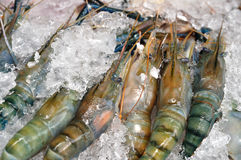 Many Black tiger prawn freeze with ice. Royalty Free Stock Photography