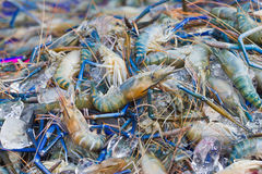Many Black tiger prawn freeze with ice. Royalty Free Stock Images