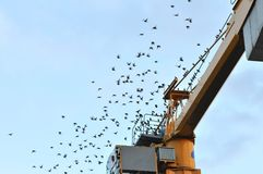 Many Blackbirds Flying away from an Orange Crane Royalty Free Stock Images