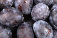 Many blue plum at day Stock Images