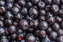 Many blueberries Stock Photography