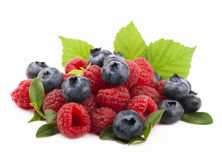 Many blueberries & raspberries. Royalty Free Stock Images