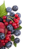 Many blueberries, raspberries. Isolated white Royalty Free Stock Photo