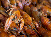 Many boiled crayfish lie on a platter Royalty Free Stock Images