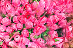 Many bouquets of pink tulips Royalty Free Stock Image