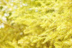 Many branch of trees. In yellow filter Stock Photography