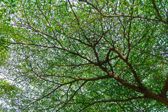 Many branches of leaf Royalty Free Stock Images