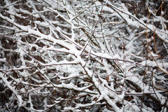 Many branches with snow as a texture Royalty Free Stock Photos