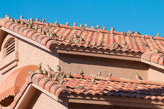 Many brids on a house roof. Royalty Free Stock Photography