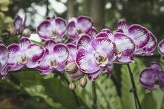 Many bright orchids Stock Photography