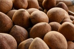 Pile of brown coconuts Stock Images